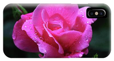Pink Rose With Raindrops IPhone Case