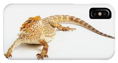 IPhone Case featuring the photograph Pogona Isolated by Benny Marty