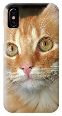 Portrait Of A Cat IPhone Case