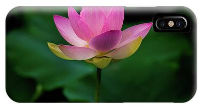 IPhone Case featuring the photograph Profile Of A Lotus Lily by Dennis Dame