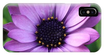 Purple Daisy Square IPhone Case