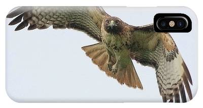 Red Tailed Hawk Finds Its Prey IPhone Case