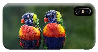 Parrot Phone Cases