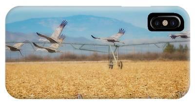 Sandhill Cranes In Flight IPhone Case