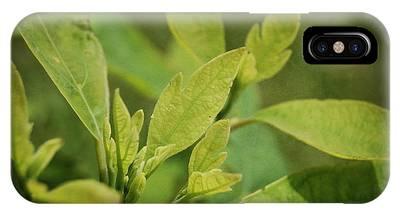 Sassafras Tree IPhone Case