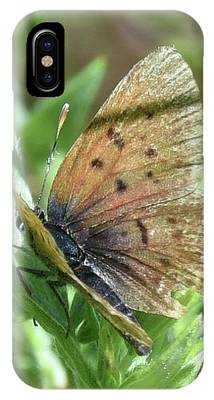 IPhone Case featuring the photograph Spreading Its Wings by Sally Sperry