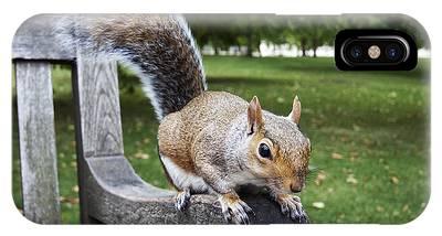 Squirrel Bench IPhone Case