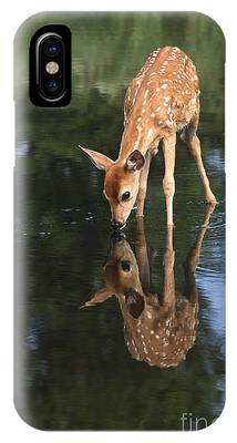 White Tailed Deer Photographs iPhone Cases