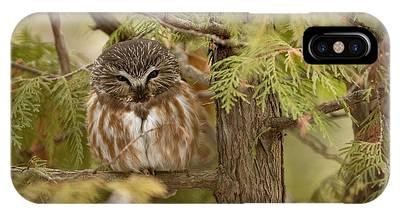 Whet Owl Phone Cases