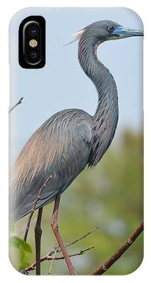 IPhone Case featuring the pyrography Tricolored Heron by Sally Sperry