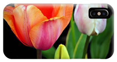 IPhone Case featuring the photograph Tulips On Black by Patricia Strand