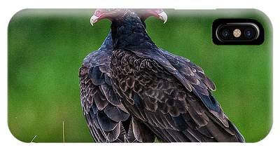 Turkey Vulture Phone Cases