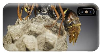 IPhone Case featuring the photograph Wasp On A Nest by Chris Cousins