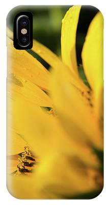 Water Drops And Sunflower Petals IPhone Case by Dennis Dame