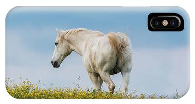 White Horse Of Cataloochee Ranch - May 30 2017 IPhone Case