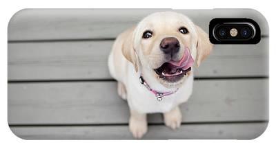 Dog Phone Cases