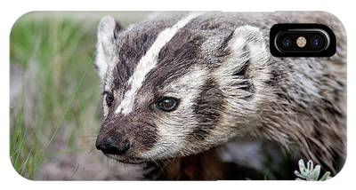 IPhone Case featuring the photograph Badger by Ronnie and Frances Howard