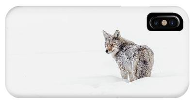 IPhone Case featuring the photograph Coyote by Ronnie and Frances Howard