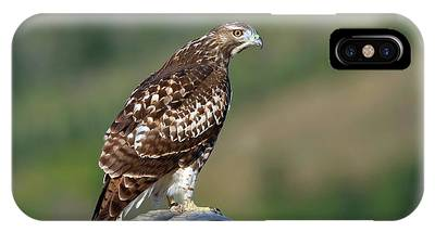 IPhone Case featuring the photograph Red Tail by Ronnie and Frances Howard
