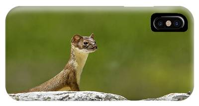 IPhone Case featuring the photograph Short Tail Weasel by Ronnie and Frances Howard