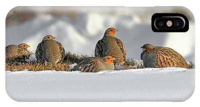 IPhone Case featuring the photograph Gray Partridge by Ronnie and Frances Howard