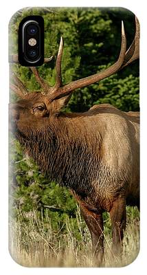 Elk IPhone Case by Ronnie and Frances Howard