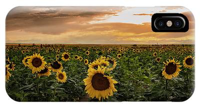 A Field Of Sunflowers At Sunset IPhone Case