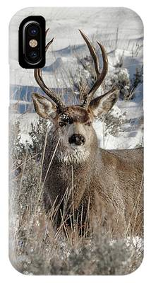 Big Buck IPhone Case by Ronnie and Frances Howard