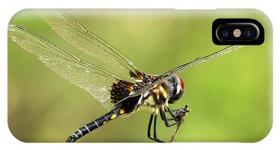 IPhone Case featuring the photograph Black Saddlebags Dragonfly by Sally Sperry