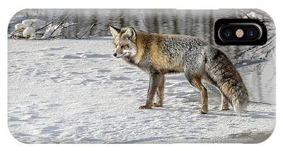 IPhone Case featuring the photograph Cross Fox Posing by Ronnie and Frances Howard
