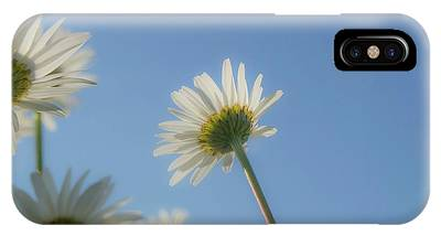 Distracted Daisies IPhone Case