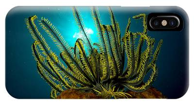 Feather Stars Phone Cases