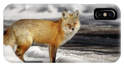 IPhone Case featuring the photograph Fox Close Up by Ronnie and Frances Howard