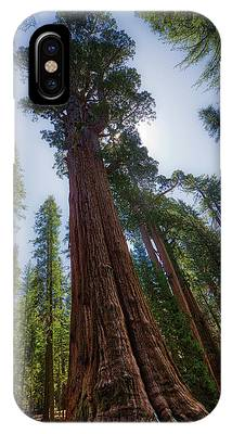 IPhone Case featuring the photograph Giant Sequoia Tree by Andy Konieczny
