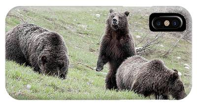 IPhone Case featuring the photograph Grizzly 610 And Cubs by Ronnie and Frances Howard
