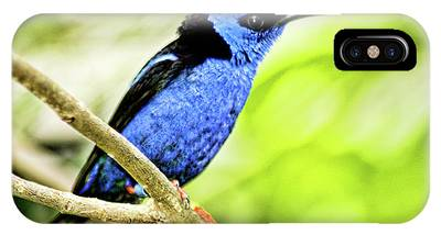 Red Legged Honeycreeper IPhone Case