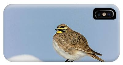 IPhone Case featuring the photograph Horned Lark by Ronnie and Frances Howard