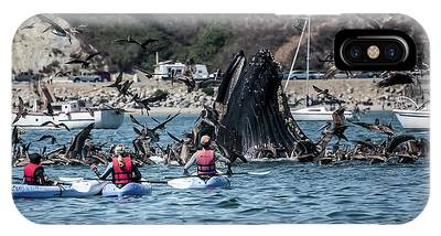 IPhone Case featuring the photograph Humpbacks In Avila Harbor by Mike Long