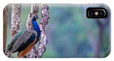 Kerala Photographs iPhone Cases