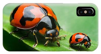 Lady Bug Phone Cases