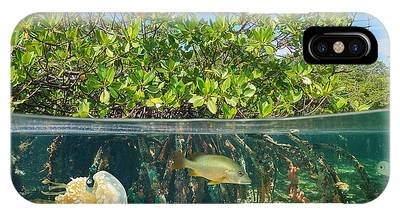 Mangrove Snapper iPhone Cases