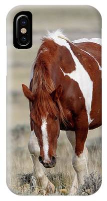 Mare Wapiti IPhone Case by Ronnie and Frances Howard