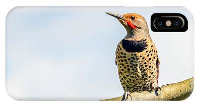 Northern Flicker Photographs iPhone Cases