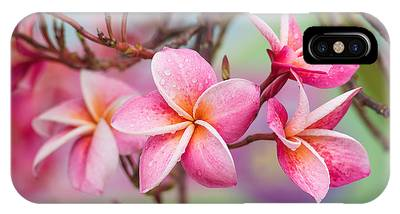 Pink Color Frangipani Flower Beauty Phone Case by Focusstocker