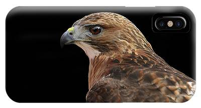 IPhone Case featuring the photograph Portait Of A Hawk by Ronnie and Frances Howard