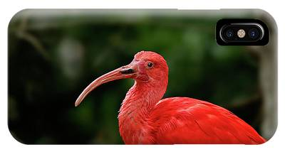IPhone Case featuring the photograph Red Ibis by Ronnie and Frances Howard