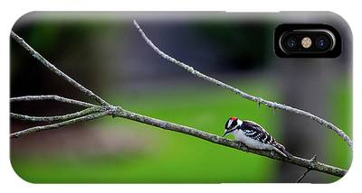 The Downey Woodpecker IPhone Case