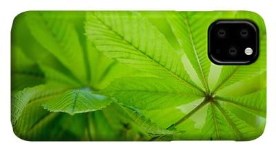 Chestnut Photographs iPhone Cases