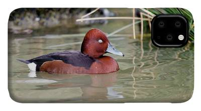 Pochard iPhone Cases