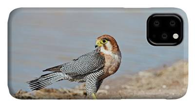 Designs Similar to Red-necked Falcon